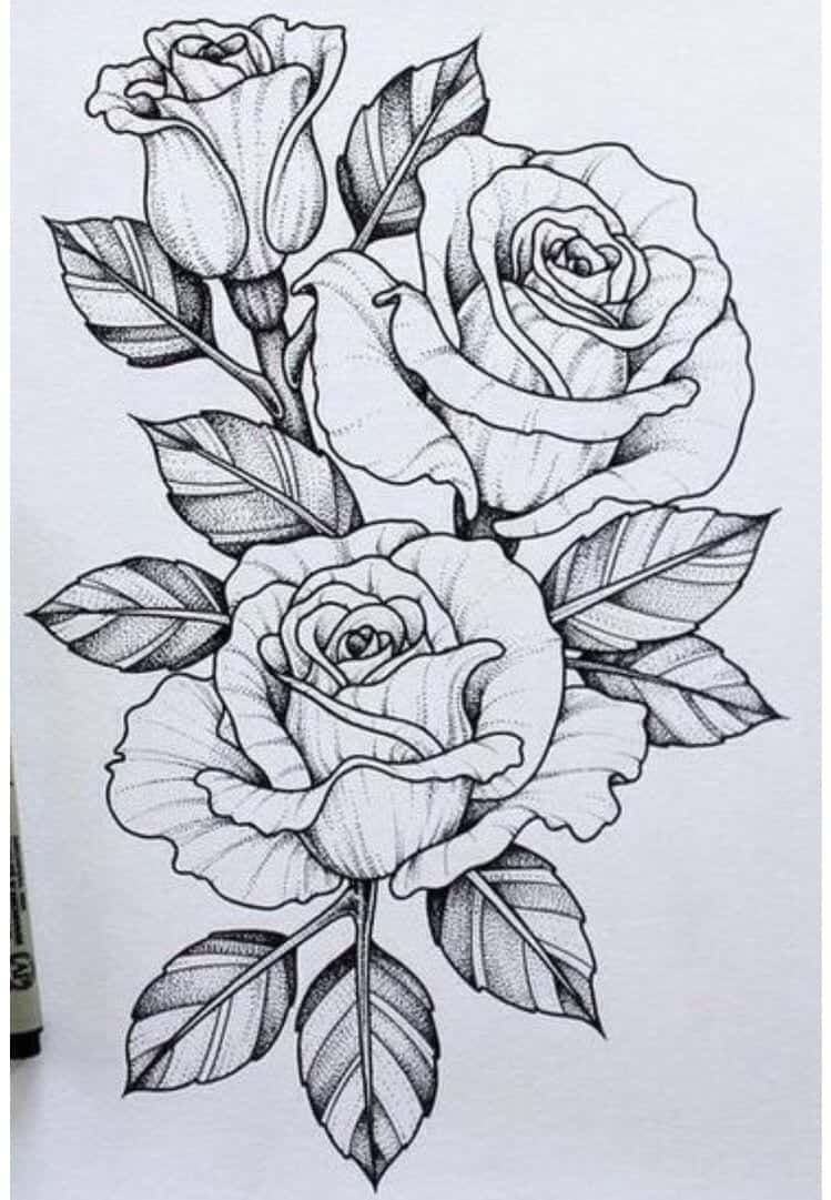 25 Beautiful Flower Drawing Information & Ideas - Brighter