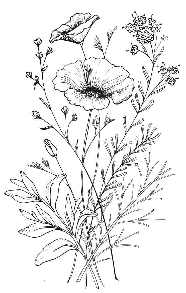 25 Beautiful Flower Drawing Information Ideas Brighter Craft