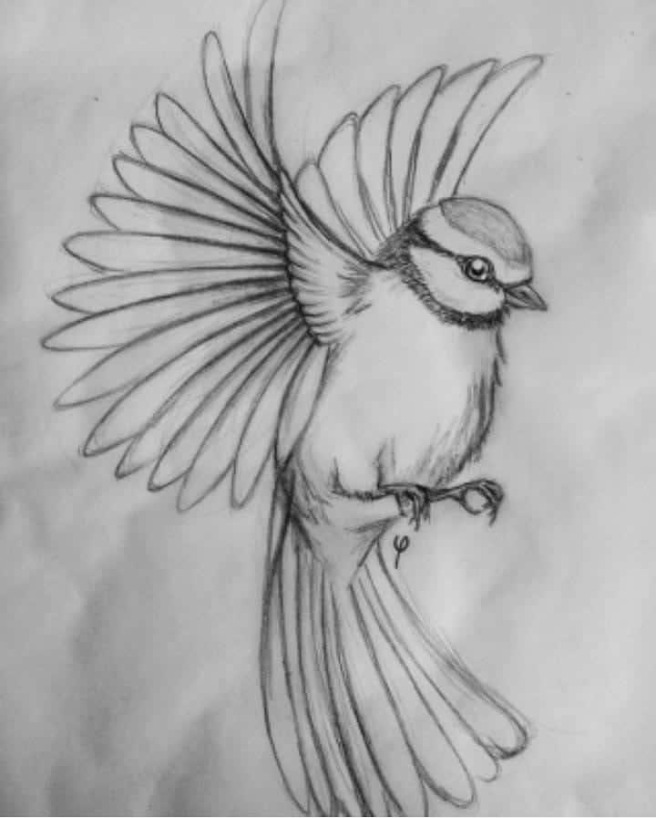 Art Sketch Easy Drawings Ideas