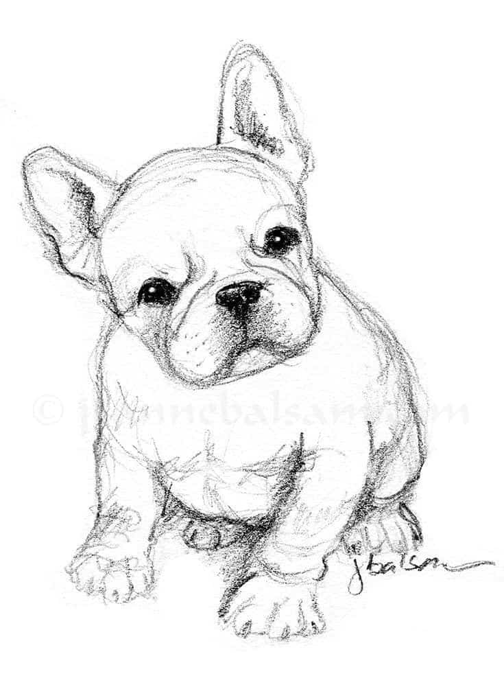 40 Free Easy Animal Sketch Drawing Information Ideas Brighter Craft Examine it closely and compare it to that of a. 40 free easy animal sketch drawing