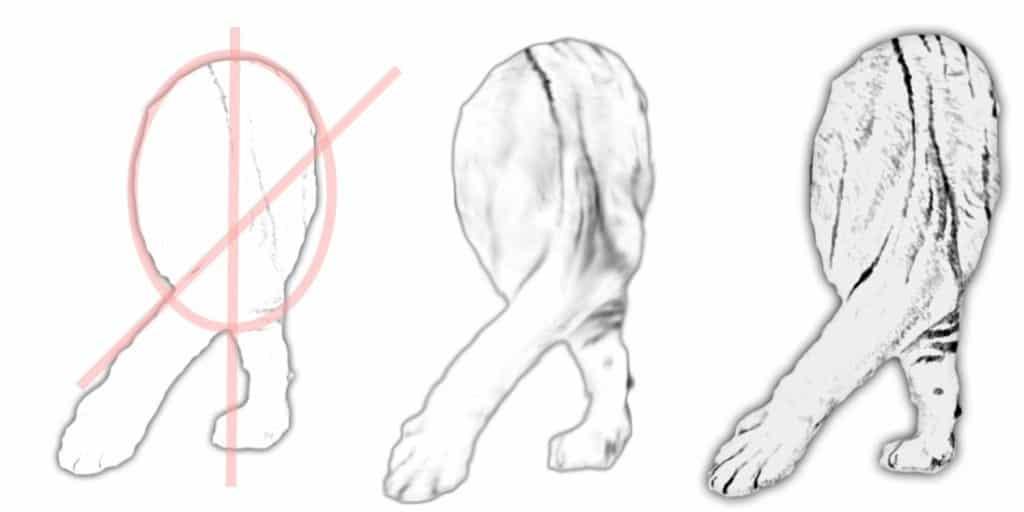 tiger drawing legs