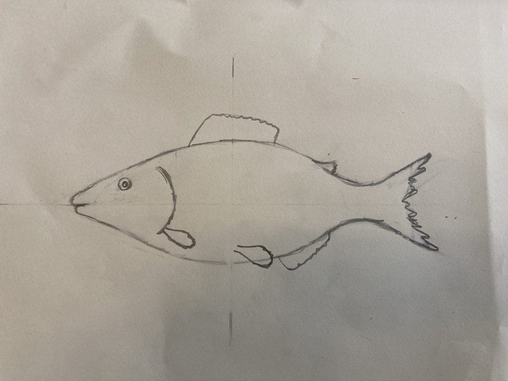 how to draw a fish basic shape