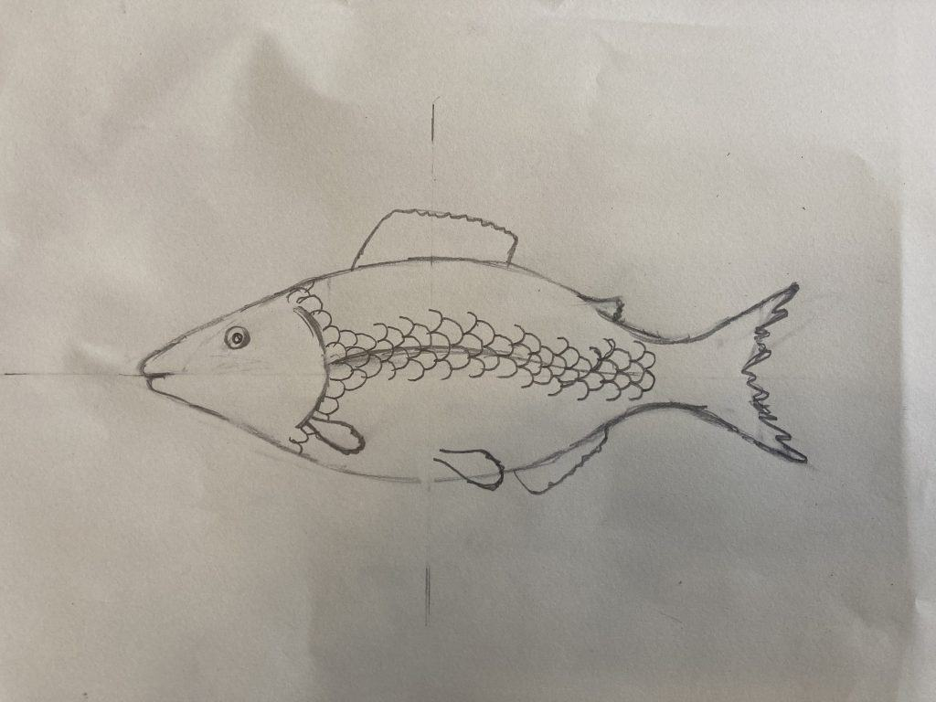 how to draw a fish lateral lines
