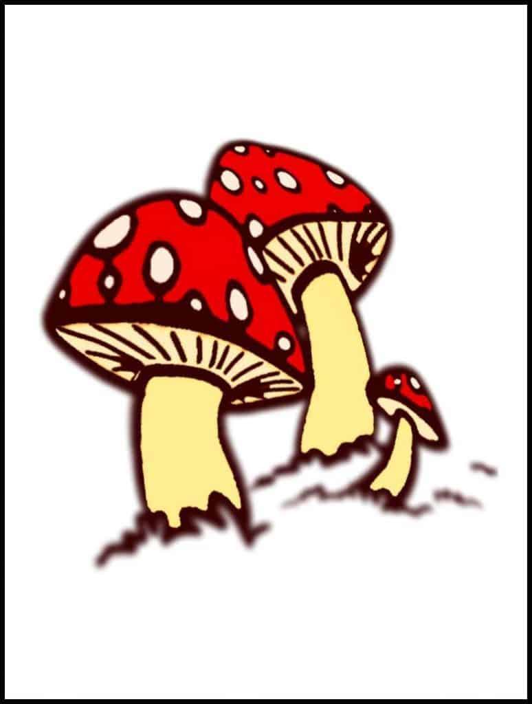 coloured mushroom drawing