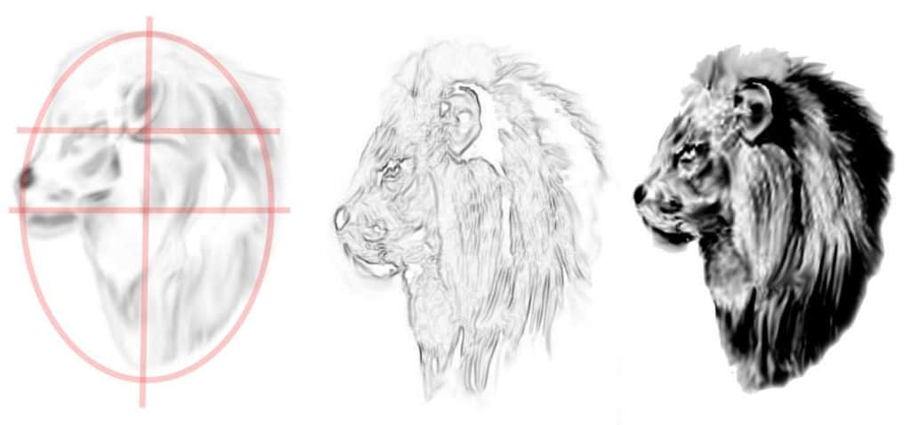 Lion Drawing faces
