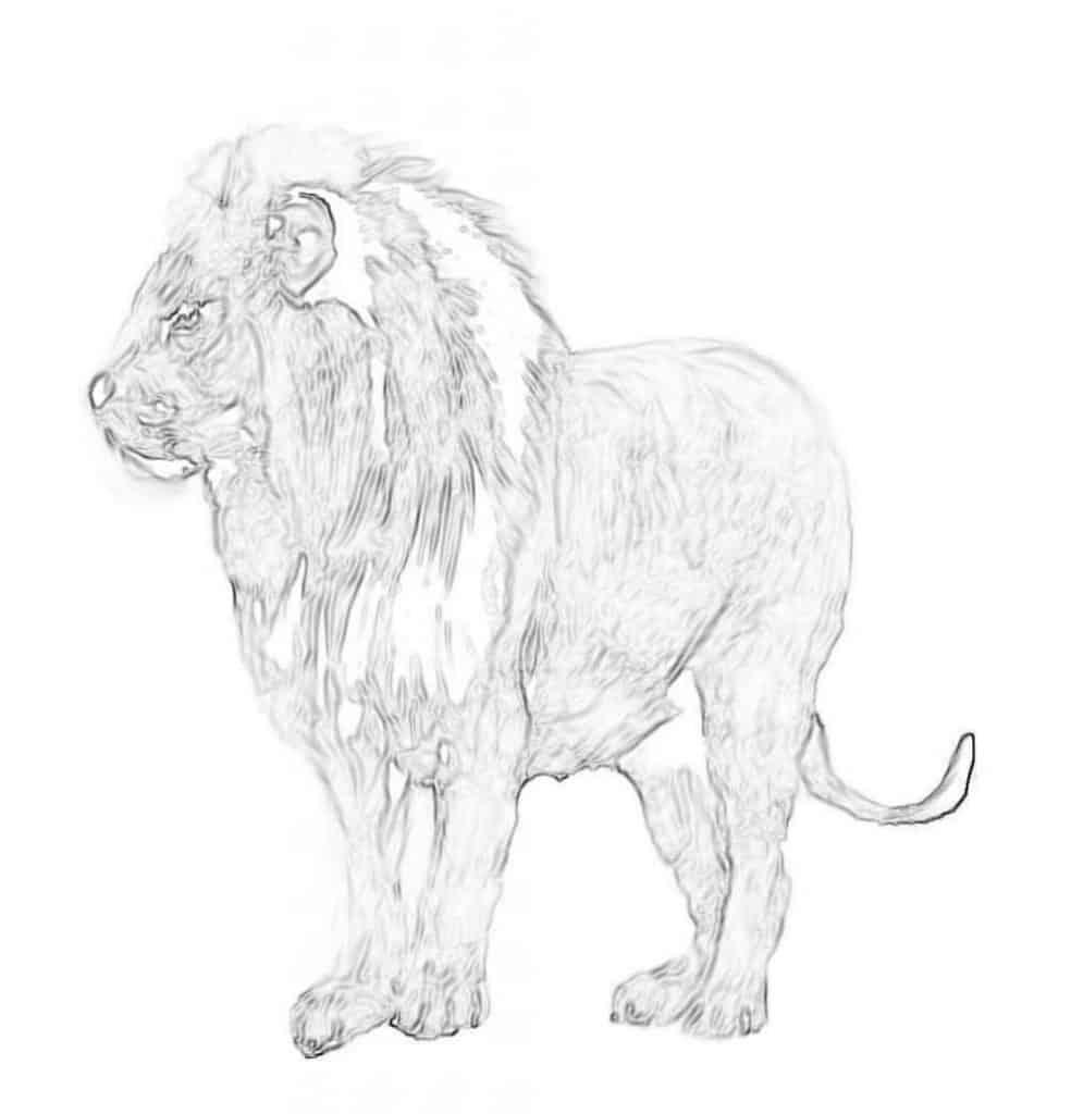 Lion Drawing sketch