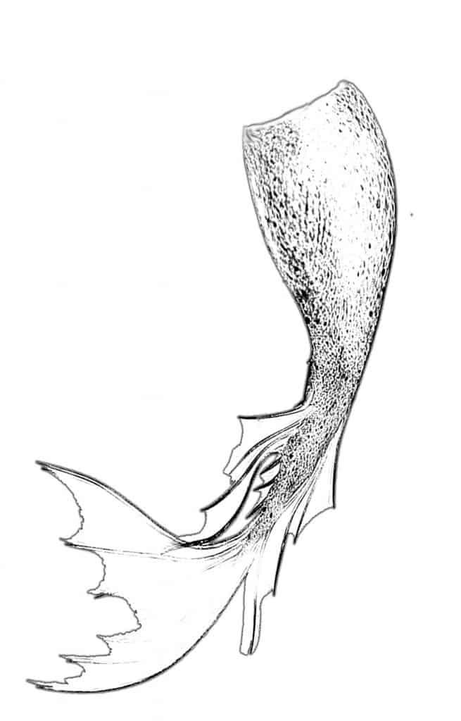 Mermaid Drawing Tail