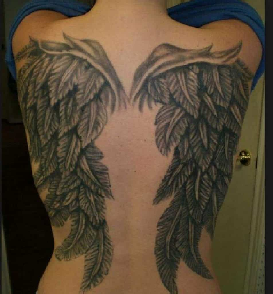 The Feathers In These Wings Are Great