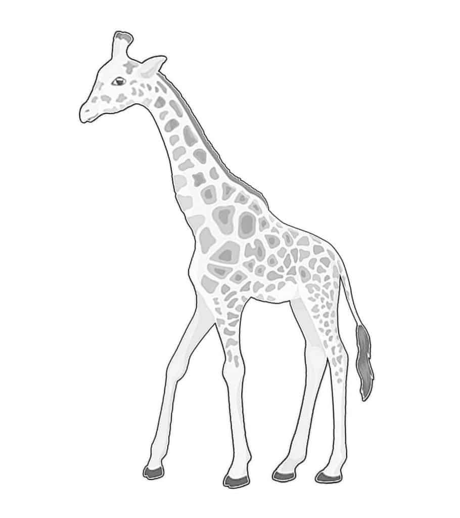 Giraffe Drawing spots